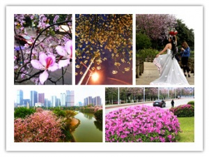 盼了一个多月 柳州终于进入花团锦簇的最美时节