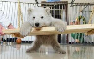山东蓬莱:小北极熊亮相见游客