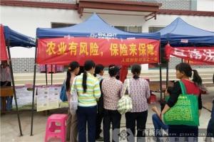 人保财险田东支公司歌圩节宣传农险知识