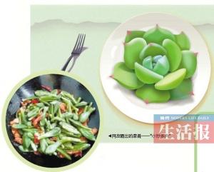 有吃货把多肉植物当菜肴? 专家提醒你悠着点吃