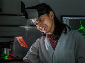 """澳科学家制造出""""芯片大脑"""""""