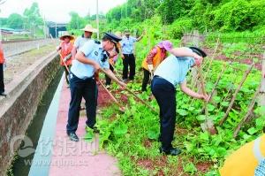 钦州市对铁路沿线的菜地进集中整治(图)