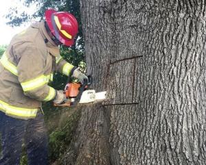 解救被困树洞的狗
