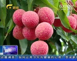 """男孩吃荔枝晕倒 夏季当心""""水果病"""""""