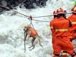 四川茂县山体垮塌 消防用绳桥将搜救犬送到核心区