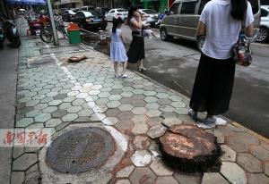 南宁一小区树叶掉落存隐患 数十棵大王椰被砍(图)