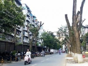 桂林一医院绿树被