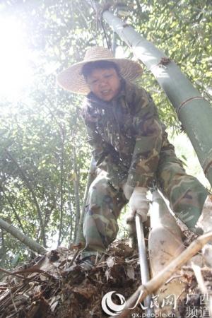 广西高峰林场一退休工靠山吃山变种笋