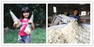 柳州螺蛳粉中的酸笋来自哪里