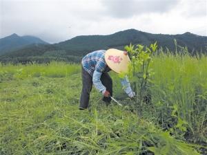 构树种植带动产业扶贫