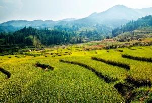 罗城:瑶寨风景民俗引客来(组图)