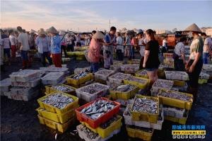 企沙渔港开海首周鱼虾满舱人欢畅