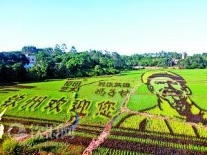 特色乡村风景展现钦州文化元素