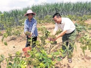 邕宁区:高效农业助推产业发展