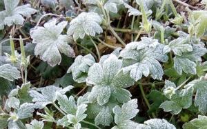 吉林气温降至零下 多地出现霜冻(图)