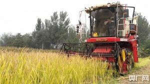 袁隆平旱稻在华北平原试种成功 成为脱贫重要手段
