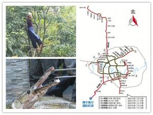 10月24日焦点图:南宁规划建设地铁机场线和武鸣线