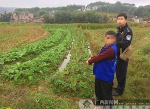 """贺州:两男子到地里偷""""菜"""" 盗走芋头4000余斤(图)"""