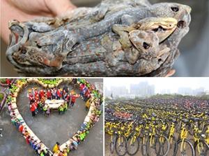 18日焦点图:南宁移交上千辆因违停被扣的共享单车
