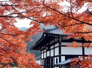 京都岚山枫叶红
