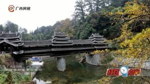 """广西三江:银杏""""披金""""乡村美"""