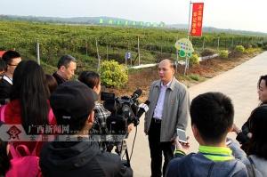 平南:夯实产业基础 筑牢县域经济发展的基石