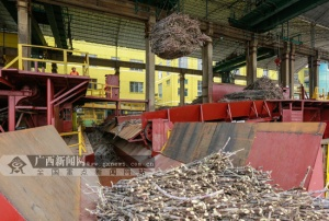 柳城:榨季正式拉开序幕 两家糖厂同时开榨(图)
