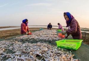 鄱阳湖畔渔家晒丰收