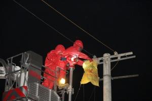 罗城:马蜂筑巢电线杆扰民 消防利用登高平台摘除