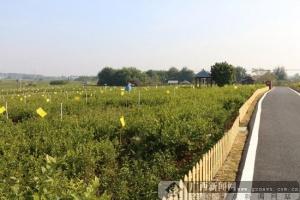 横县乡村建设成果凸显 群众幸福感增强