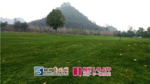 柳州:马鹿山公园西草坪春节前开放 让你自由奔跑