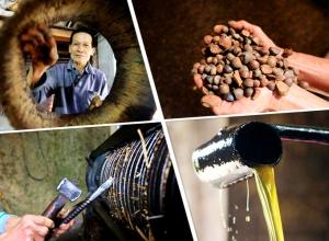探秘融安古法榨茶油 每公斤120元仍供不应求(图)