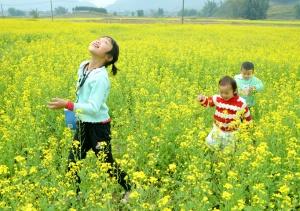 高清:来宾温暖如春 万亩油菜花迎春开