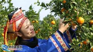 打造钟山贡柑品牌 带动全县贡柑产业发展