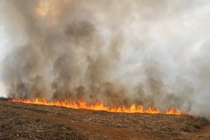 甘蔗地着火 警民合力两个多小时将火扑灭(图)