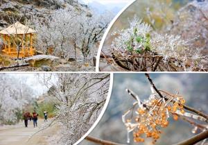 高清:广西山间冰挂晶莹剔透 美景宛如童话世界