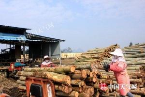 来宾天气转好 利于开展木材加工
