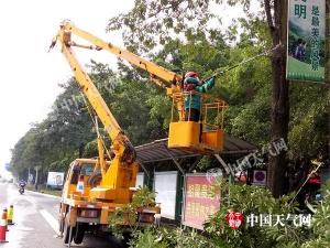 贵港冬日暖阳 绿化树木修剪忙