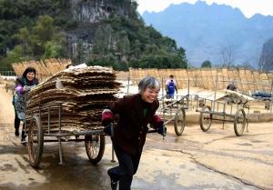 都安旱藕粉丝旺销 每天生产10吨依然供不应求(图)