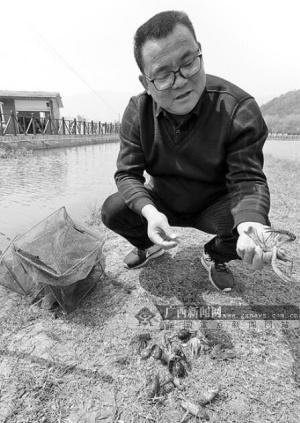 创业致富带头人冯应红:养好莲和虾,不愁愁没钱花