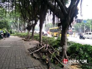 柳州:春天树木生长 园林工人忙修枝(图)