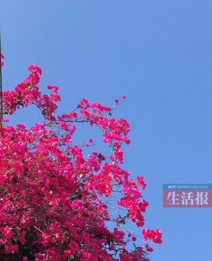 将来两天广西各地都是晴天气 早晚温差大防备伤风