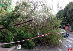 南宁较强阵风刮倒大树