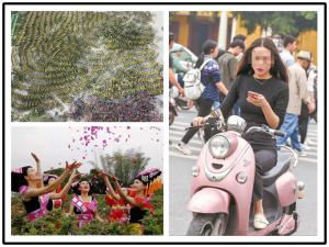 """3月29日焦点图:南宁上千辆共享单车被""""关禁闭"""""""