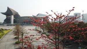 高清:赏春正当时 邕城大街小巷的鲜花争相开放