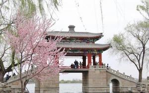 高清组图:春风十里 花满城