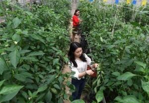 江西樟树加快高标准农田建设步伐