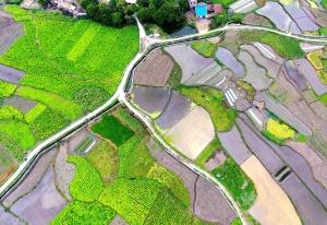 高清图集:环江旷野葱茏如玉 毛南山乡披绿装
