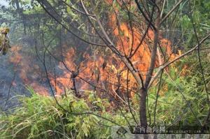 龙邦边防检查站紧急驰援 成功扑灭一起山林火灾