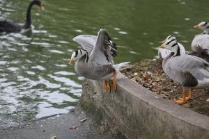 """这种""""世界上飞得最高的鸟类"""" 在南宁动物园有5只"""